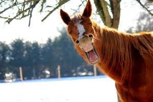 A funny smiling horse