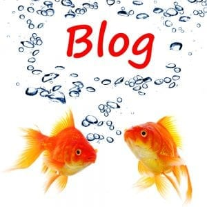 Having a blog